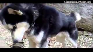 Anne Diye Ağlayan Köpek!