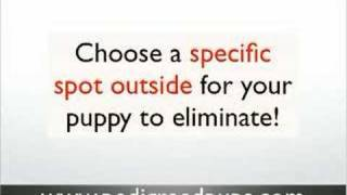 Puppy house breaking tips