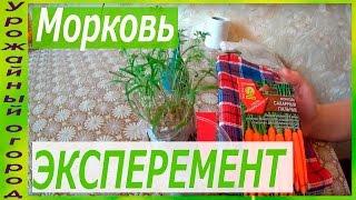 РАССАДА МОРКОВИ!ЭКСПЕРИМЕНТ!(В этом видео я покажу рассаду моркови посаженную в самокрутку без земли ради эксперимента!!! ..., 2016-03-31T15:34:00.000Z)