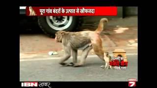 Dekhen: Langoor Ki Awaaz Se Kaise Bandron Ka Bhagata Hai ye Shaksh!