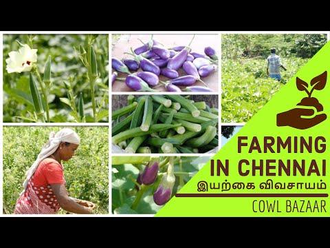 FARMING IN CHENNAI | சென்னையில் விவசாயம் |300+ Acres Organic Farm|Cowl Bazaar| தமிழ் vlog |4K