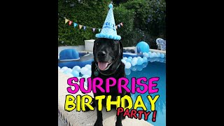 Our Dogs Surprise 7th Birthday Party 2020