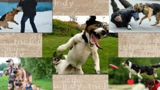 Бесплатный  проект - ProShow Producer - Про собаку