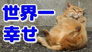 【海外の反応】日本の野良猫だけが持つというある特徴に外国人「何やらみんな生き生きとしてるな……。」