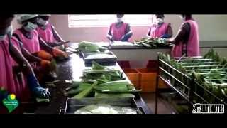 Aloe Vera Cultivation and Production of Shri Soundariya Herbotech Products