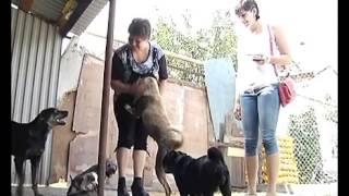 Липецк. ТВК. Во всем мире отмечают день бездомных животных