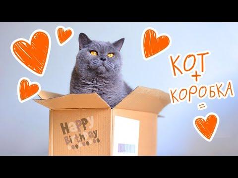 Вопрос: Почему кошки любят коробки?