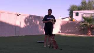 Teaching A Puppy To Heel | Sit Means Sit Dog Training