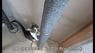 화학품료 안들어간 깨끗한캔사료는 고양이가 안먹을까?