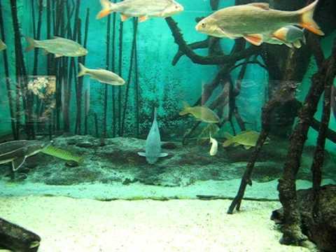 Frankfurter Zoo Aquarium