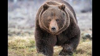 Недоеденные медведем рассказывают.