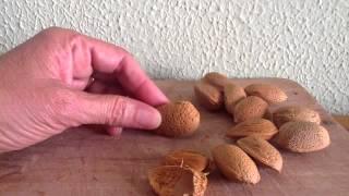 Hacer Almendras Tostadas - Receta De Frutos Secos