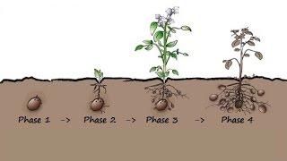 Planet Wissen - Kartoffelvielfalt