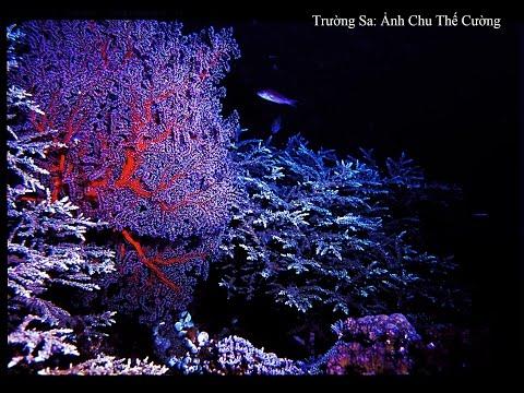 Phim đặc biệt Khám phá Dưới biển Trường Sa - Coral reef in the Spratly Islands , Vietnam