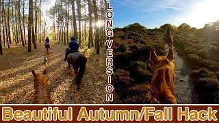 Sunset Forest Ride   LONG VERSION   Helmet Cam   inc. all trots/canters