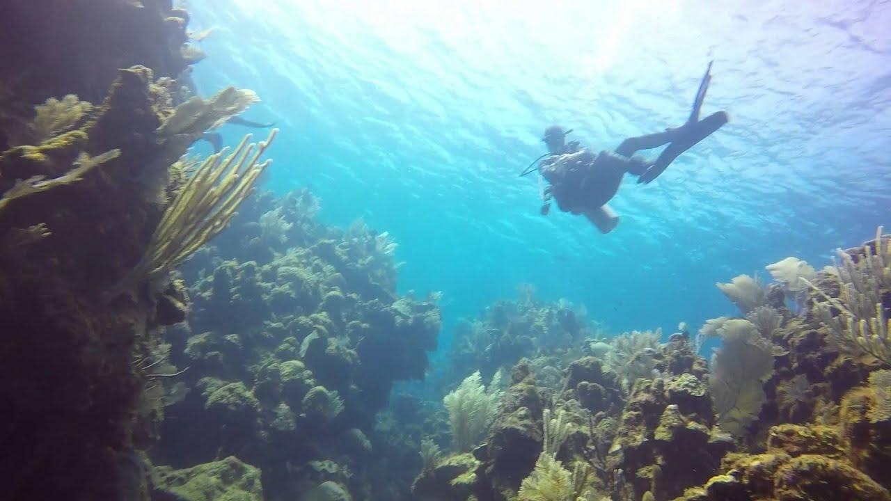 5 20 2015 el aguila wreck dive roatan honduras youtube - Roatan dive sites ...