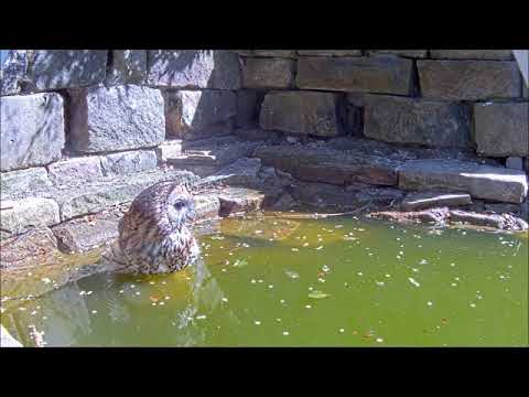 Robert E Fuller: Who' Who's Feeling Hot? Watch this tawny cool off this summer