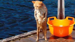 ПРИКОЛЫ С ЖИВОТНЫМИ ДО СЛЕЗ Смешные КОТЫ 2021 Приколы с КОТАМИ Funny ANIMALS video 49