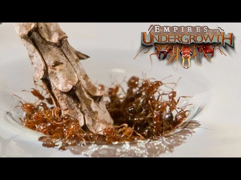 THE GREAT FLOOD! - Empires of the Undergrowth BETA Gameplay | Ep5