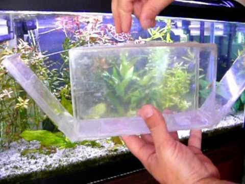 Aquarium fish trap experimental for Aquarium fish trap
