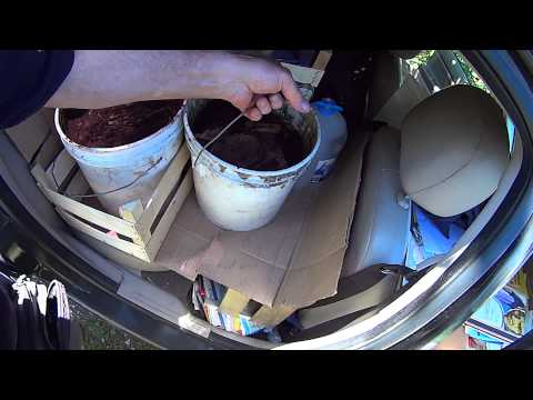 На корм дождевым червям привёз 100 кг макулатуры и 30 л кофейной гущи 12.06.2015.