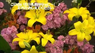今日はいつものように熱海にあるマンションのロビーにお花見に来ました.