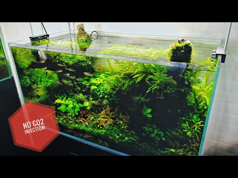 90cm planted tank without CO2 injection