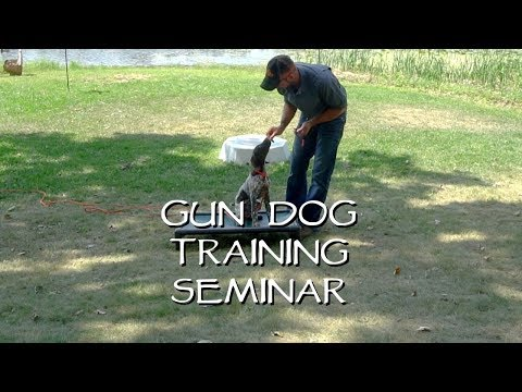 Place Training for your Dog in 3 Easy Steps    Upland Bird Dog Training