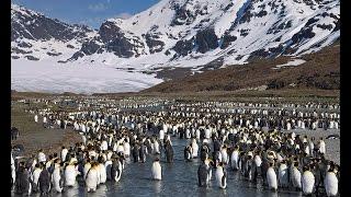 zavodovski adası zavodovski island   penguenlerin lkesi   antarktika kıta