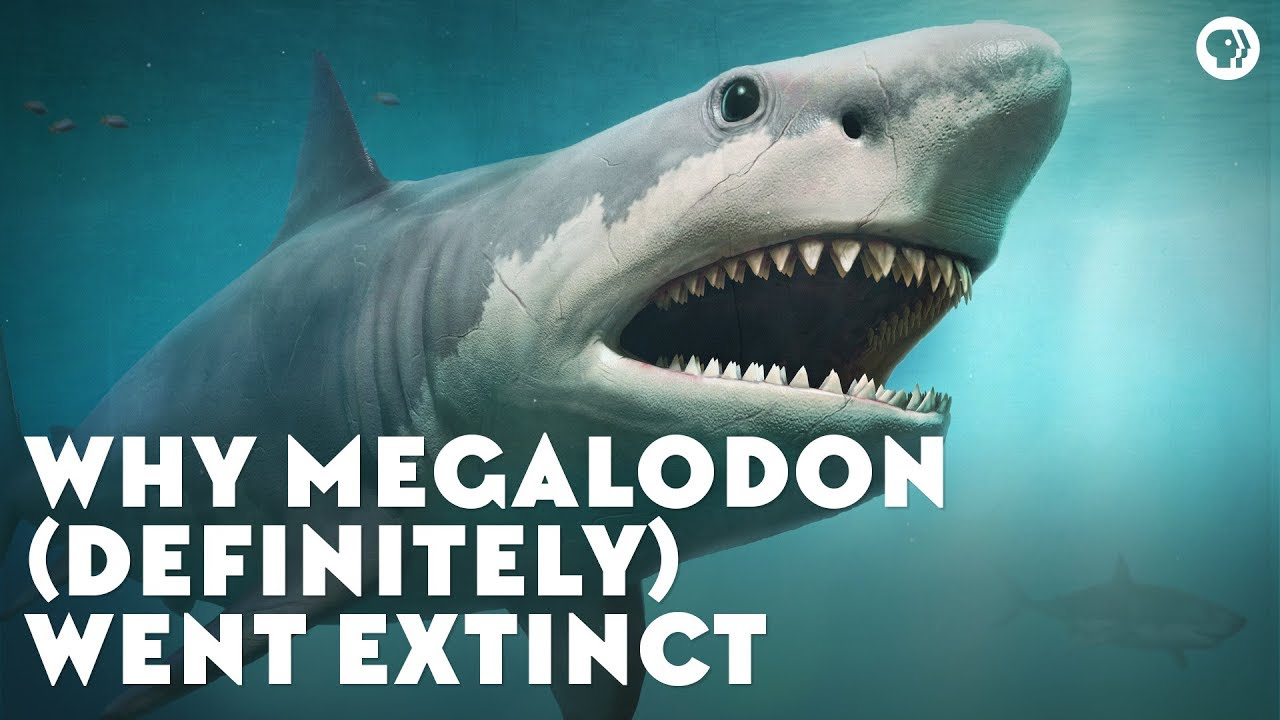 Why Megalodon (Definitely) Went Extinct