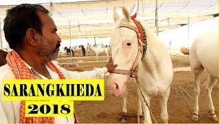 बिकाऊ घोडे - सारंगखेडा 2018    Horses for sale at SARANGKHEDA 2018