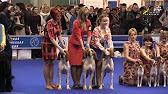 Продажа собак алматы. На доске объявлений olx легко и быстро можно купить щенка. Заведи друга прямо сейчас!