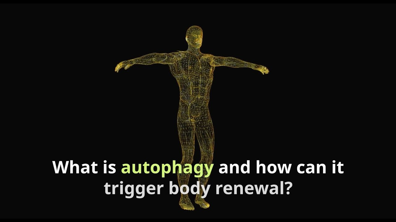 Autophagy and Periodic Fasting: The Real Ways to Renew Your