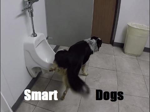 Dog Pees On Kitchen Floor