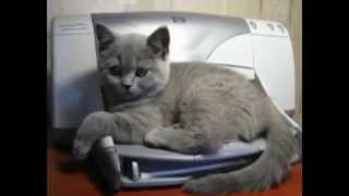 ТОП 5.  Смешные Коты и Принтеры #2