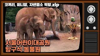 서울어린이대공원 방구석 동물원 - 코끼리, 미니말, 자넨염소 먹방.zip썸네일