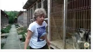 Помогите собакам, они голодают! Психолог Марина Линдхолм