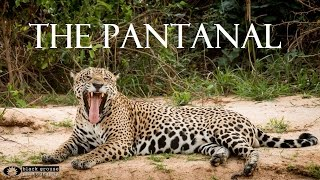 The Pantanal Wildlife Adventures