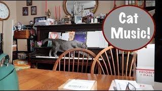 Cat Music!