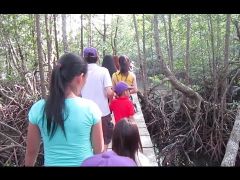 Mangrove Forest resort in Koh Kong Province, Cambodia