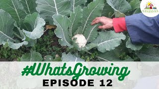 EP 12 | #WhatsGrowing in our Wifi Garden [02.01.2021]