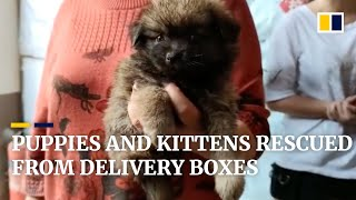 160 puppies and kittens rescued after being packed into boxes for delivery in China