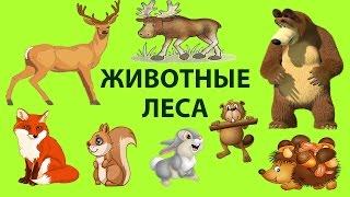 ЖИВОТНЫЕ ЛЕСА Животный мир Развивающее видео про животных для детей ДИКИЕ ЖИВОТНЫЕ  ANIMAL FORESTS