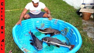 GIANT CATFISH POOL POND!