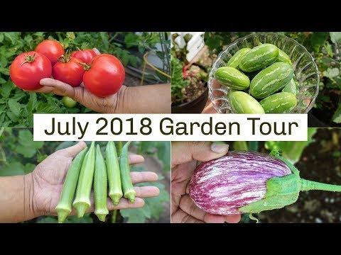 California Garden Tour July 2018 – Gardening Tips, Harvests & More!