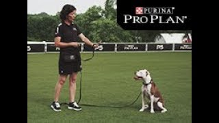 Dog Obedience - Stay - Pro Plan P5 Training