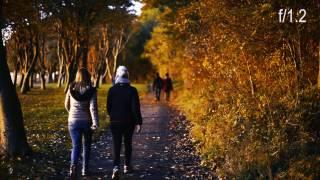 Nikon 50mm f/1.2 AI-S Lens and the golden autumn color, D810