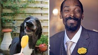 Животные которые похожи на некоторых знаменитостей