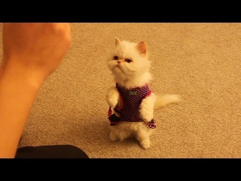 Kitty Training: Marie Learns Commands