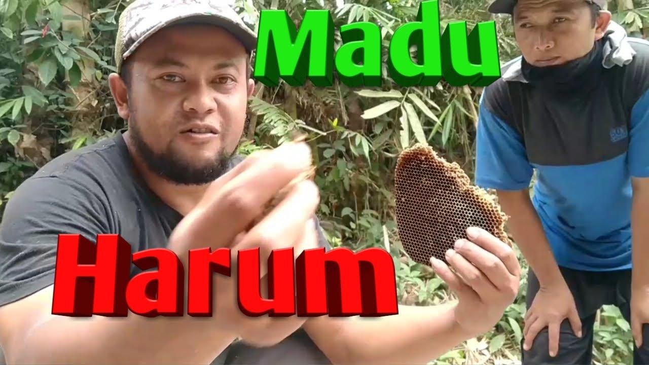[Part I] Berburu Madu Lebah Liar Hutan Merapi | Hunting honey bee Merapi forest